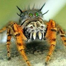 Image 325848 Misunderstood Spider Know - 67 best spiders images on pinterest jumping spider animals and