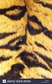 Beautiful Texture Tiger Texture Stock Photos U0026 Tiger Texture Stock Images Alamy