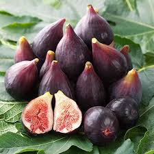 figs delivery brown turkey fig for sale fast growing trees