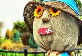 imagenes del dia de thanksgiving scarecow field holiday thanksgiving day thanks gratitude