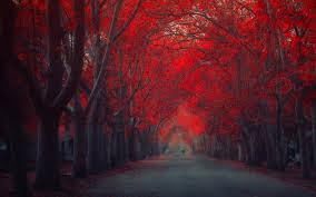 color psychology in marketing loving red arafen