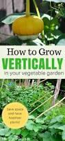 How To Plant Vertical Garden - vertical gardening how to grow up in your garden the free range