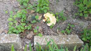 mushrooms and the problems they can incur