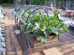 vegetable gardening in containers w soil photos u0026 posts