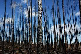 How Many Wildfires In Canada by After The Fire Recovery In Fort Mcmurray The Atlantic