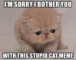 Stupid Cat Meme - i m sorry i bother you with this stupid cat meme super sad cat