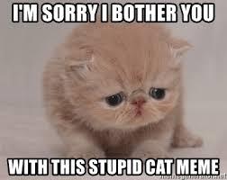 Stupid Cat Meme - i m sorry i bother you with this stupid cat meme super sad cat