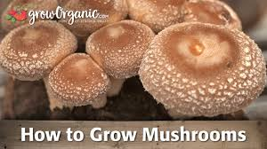 how to grow mushrooms indoors organic gardening blog