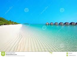 recinto per cani sunnypet dhw6001 l 226 x p 160 x h isola di natale fotografia stock immagine di immagine 43328380
