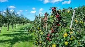 flower gardening 101 fertilizer recipe gardening 101