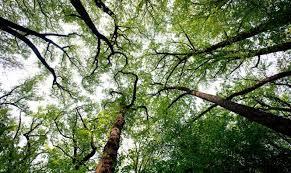 washington dc city wide tree canopy the power of us
