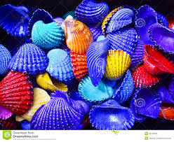 bold colors bold color shells stock photo image of shell yellow 26732562