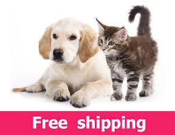 Window Wall Mural Highlands Peel Cat And Dog Wall Sticker Labrador Puppy And Kitten Wall