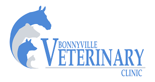bonnyville veterinary clinic veterinarian in bonnyville alberta