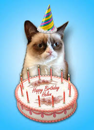 Cat Birthday Memes - grumpy cat happy birthday song grumpy cat pictures