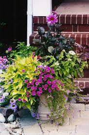 261 best container gardens images on pinterest gardening