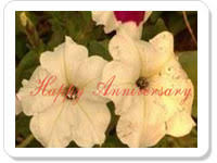 anniversary ecards free free wedding anniversary ecards greetings