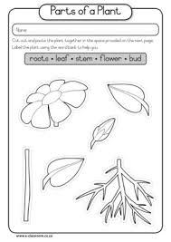 of part seed plant diagram caps grade1 lifeskills term3 plants