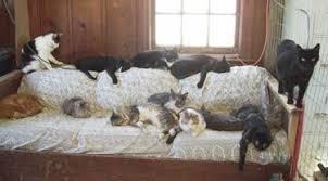 gatti divani gatto che si rif罌 le unghie