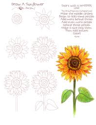 drawing a sunflower draw pages from thedrawpage com pinterest