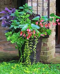 245 best gardening containers and hanging arrangements 2 images
