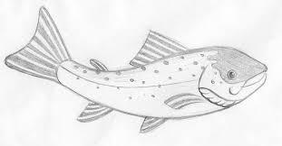 atlantic salmon pencil u2014 darren whittington illustration