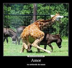 imagenes de amistad jirafas amor desmotivaciones