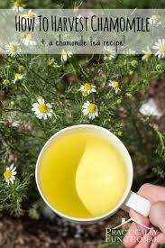 Sencha Kitchen Sink 60 by 170 Best Kitchen Herb Garden Ideas Images On Pinterest Herbs