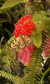 33 best hummingbird u0026 butterfly garden images on pinterest
