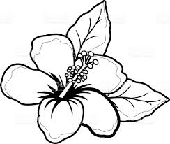 coloring pictures of hibiscus flowers hawaiian hibiscus flower black and white coloring book page stock