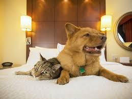 Comfort Pet Certification Esa Hotel Laws Therapy Pet