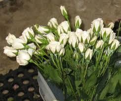 Wedding Flowers Greenery How To Make Wedding Bouquets Free Flower Tutorials