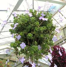 chambre d agriculture 71 plante interieure fleurie pour chambre d agriculture 49 génial les