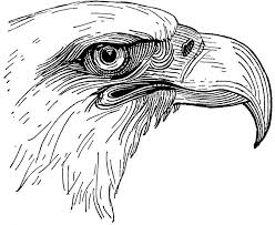 44 best eagle head tattoo drawings images on pinterest eagles