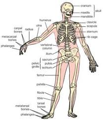 Human Anatomy Planes Of The Body Free Diagrams Human Body Diagram Showing The Chief Terms Of