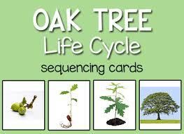 montessori tree printable tree life cycle prekinders