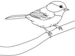 25 bird drawing ideas