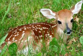 how to prevent deer from ruining your lawn in bowie md