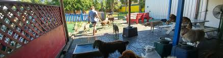 pooches playhouse jacksonville beach dog daycare