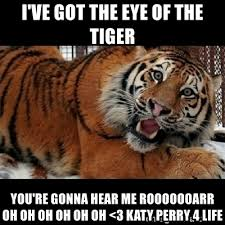 Eye Of The Tiger Meme - i ve got the eye of the tiger you re gonna hear me rooooooarr oh oh