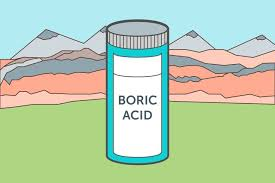 boric acid for bed bugs does boric acid kill bed bugs hunker
