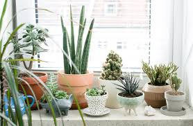 Winter Indoor Garden - best winter houseplants u0026 how to take care of indoor plants in