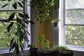Plants For Living Room Living Room Indoor Plants Pots Living Room Transitional Design