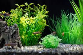 Live Plants In Community Aquariums by Getting Started With Freshwater Fish