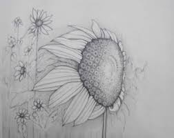 pencil art work white butterfly white daisy original