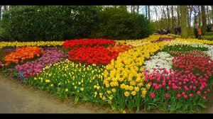 netherlands 2017 keukenhof gardens and tulip fields gopro hd