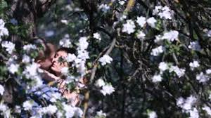 Tree With Little White Flowers - enloved sensual couple in blossoming cherry orchard young man