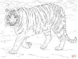 coloring pages tiger eson me