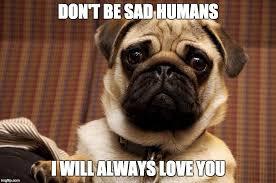 Sad Pug Meme - pff pug friends forever the social media site for pugs pug com