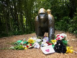 01 harambe gorilla cincinnati zoo jpg